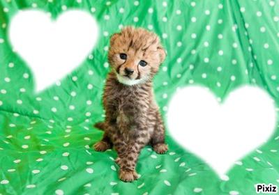 Baby Feline