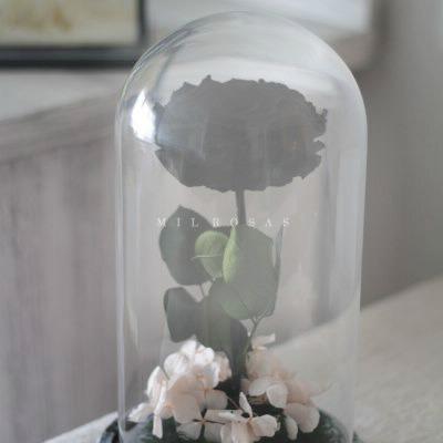 burbuja con rosa negra