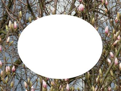 printemps ; magnolias for ever