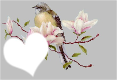 Oiseau et coeur