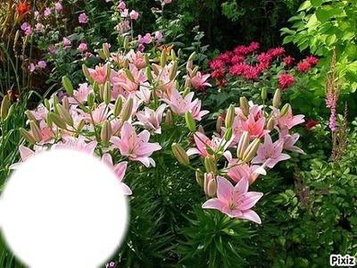 *Fleurs de Lys*