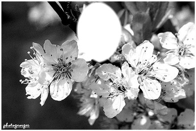 Photo Montage Fleur Noir Et Blanc Pixiz