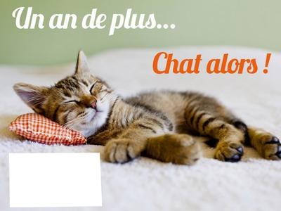 Montage Photo Joyeux Anniversaire Chat Pixiz