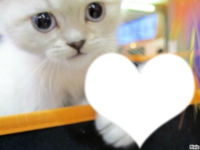 le chaton du coeur <3