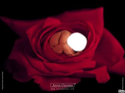 bébé dans une rose