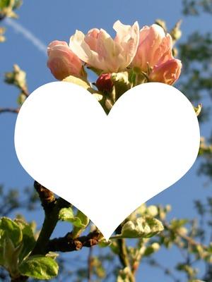printemps , fleurs de pommier. une photo