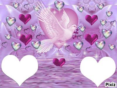 une colombe avec pleins de coeurs  2 photos coeurs