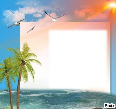 îles et palmier