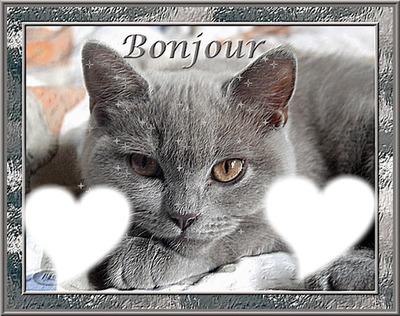 Photo Montage Bonjour Avec Chat Pixiz