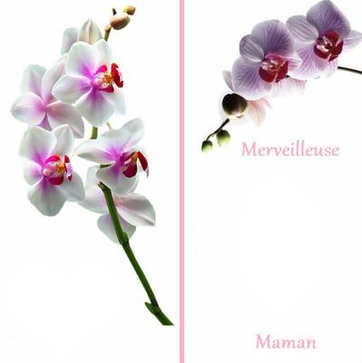 carte bonne fête maman Photo montage bonne fête maman orchidée carte postale   Pixiz