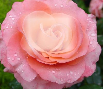 photo montage flor hermosa pixiz