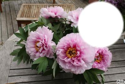 bouquet de pivoines*