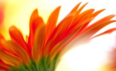 orange d'été