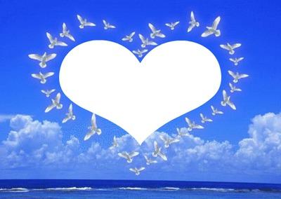colombes en forme de coeur 1 photo