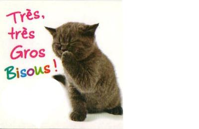 chat qui envois des bisous 2 photos
