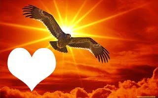 aigle au soleil