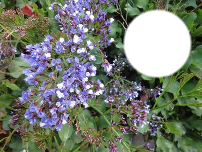 Botanischer Garten, Tafira Baja, Gran Canaria