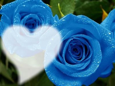 """Résultat de recherche d'images pour """"rose bleue"""""""