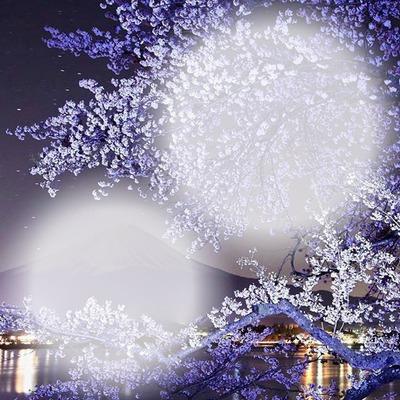 cerisier en neige
