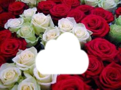 les roses ;rouges