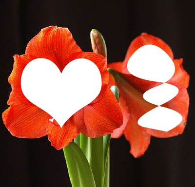 Fleur de la nature 1
