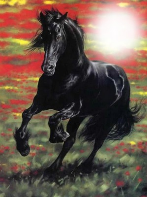 photo cheval bouchiba djelfa algerie