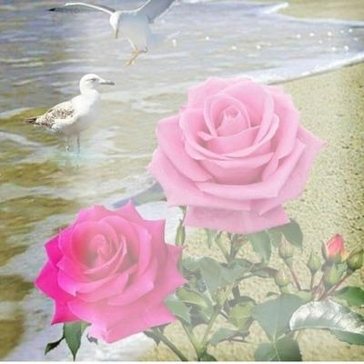 2 rosas rosadas