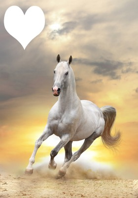 paarden hart