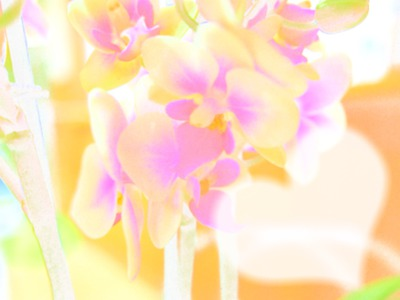 aquarelle orchidee