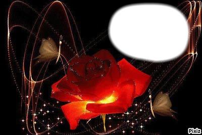 rose lumineuse