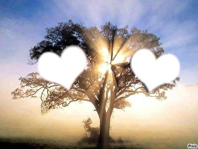arbre en coucher de soleil