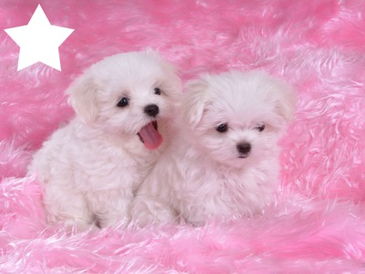 MY PUPPIES ARE STARS
