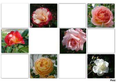 pele mele de roses