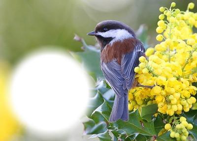 Oiseau-fleurs jaunes