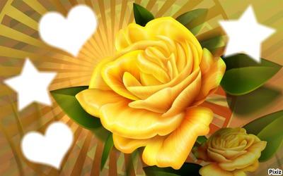 les roses jaunes 4 photos