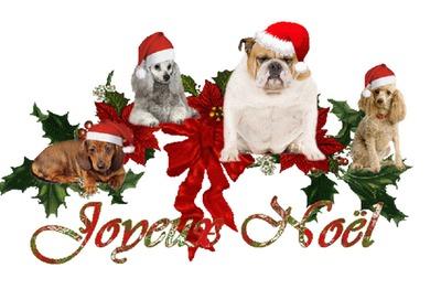 Un Noel aussi pour les animaux