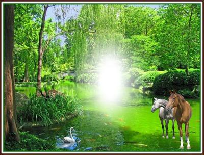 Cadre nature chevaux
