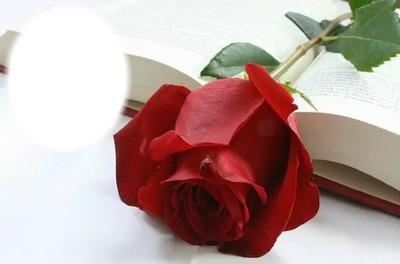 Tu mi rosa bella