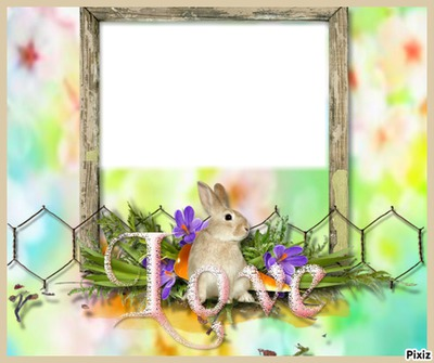 cadre lapin