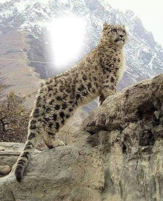 Jaguar majestuoso