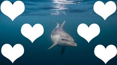 cadre dauphin