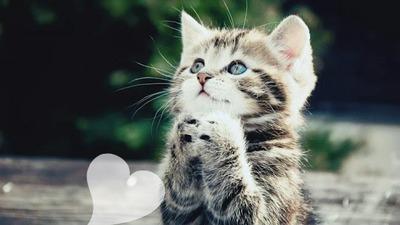 Chat Special je sais que aucun ne va pas utiliser cet adorable chat