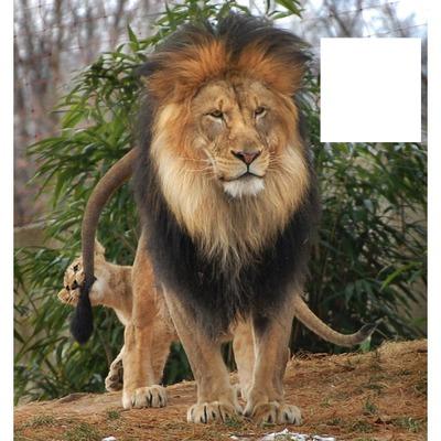 león#4