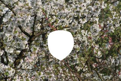 Cerisier en fleurs 2