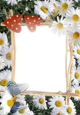 daisy frame
