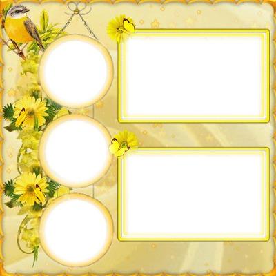 5 photos cadre fleur jaune iena