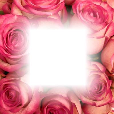 pink roses frame
