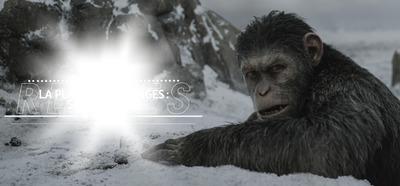 la planete des singes suprématie 6