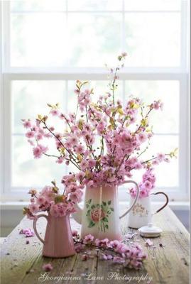Pink Flofwering Almond