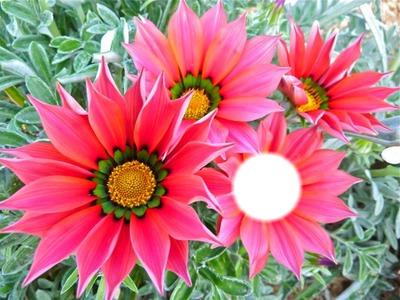 flowers HD